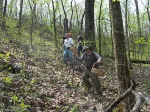 People on a moderately steep slope in the woods during summer. The people have baskets in one hand and walking sticks in the other.